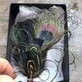 Black peacock feather brooch